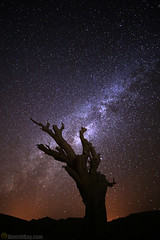 Reach for the stars (AimishBoy) Tags: sky tree nature night canon way stars star israel long exposure desert branches astro jordan galaxy nebula astrophotography universe drama milky cosmos acacia tentacles 6d 14mm rokinon