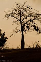 Baobad? (alejocock) Tags: africa travel afro negro bolivar cartagena slave fuga esclavo afroamericano palenquedesanbasilio benkosbioho