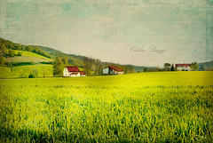 Remembering the Country (Odilia Liuzzi Photography - www.odilialiuzzi.com) Tags: flowers trees sea snow painterly flower art texture nature grass rural photoshop canon landscape photography landscapes nikon painted surreal dreams lightroom flypaper texturex