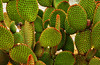 Green and Red (Kari Siren) Tags: plant flower algarve leav
