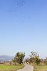 CRANES FLYING OVER THE HULA NATIONAL PARK_IMG 8656_ITAMAR GRINBERG_IMOT (Israel_photo_gallery) Tags: people nature birds animals landscape israel nationalpark hula lakes galilee naturereserve birdwatching northernregion uppergalilee hulavalley itamargrinberg animalreserves