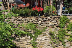 Beside the Piscataquog (trochford) Tags: flowers vines riverside newhampshire nh stonewall embankment gardenstore newboston piscataquogriver