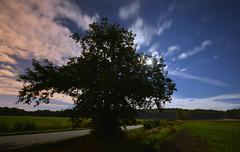 Moonlight Shadow II (Kojaniemi) Tags: alnusglutinosa blackalder alder star night moon moonlit moonlight kimmoojaniemi road field forest woods grass europeanalder