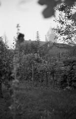Autumn mood (Blitzwuerfel (flash cube)) Tags: burgundy werracamera tessar2850 efke50 rodinal