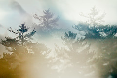 Day 240/366 (Perched) Tags: tiltshift evergreentrees nature experimentalphotography icm multipleexposures 365project project365 365