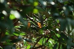 DSC03665 (oliveplum) Tags: gardensbythebay light tribaltempofloraldisplay sony singapore flowerdome olympusomsystemzuikomcautot12f85mm plant bokeh