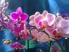 Flowers color (annovi.frizio) Tags: flower flowers rose color colours nature