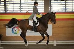 Copa del Rey de Doma Clsica (Myprofe) Tags: dressage domaclsica ccvm clubdecampovillademadrid horse caballo madrid equestrian copadelrey
