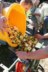 Filling up the apple scratter with fresh apples (Local Food Initiative) Tags: permaculture apple day apples press pressing cider group sustainable orchard scrat scratting crusher scratted pulper