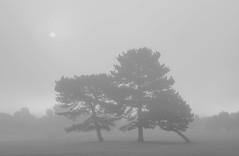 Lean on Me (Glenn D Reay) Tags: fog trees sun mono blackandwhite morning pentax k30 sigma1770hsm glennreay