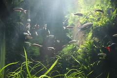IMG_5640 (godpasta) Tags: newportaquarium kentucky newport aquarium