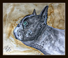 Joe (patrick.verstappen) Tags: buldog dog joe painting pat art painted paper facebook fabriano face hdr pet yahoo photo picassa pinterest portrait nikon d7100 sigma autumn flickr gingelom google acryl watercolor waterbrush nutwater