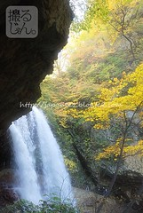 161022 (finalistJPN) Tags: waterfall autumncolors autumnseason yellowleaves autumnleaves autumnintowinter misty japanguide shigakogen discoverjapan nationalpark discoverychannel nationalgeographic traveljapan stockphotos availablenow