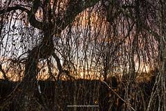 Solnedgang p Kielsgrden 2016 (Appaz Photography ) Tags: appazphotography denmark jylland ry kielsgrden solen sun sunset solnedgang