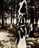 paris 1984 tuileries ombres marronnier 06 84 (patrickdeby) Tags: paris tuileries jardin marronnier ombre feuille