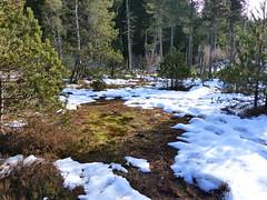 Tourbière du Luitel (héloïsenaturaliste) Tags: nature paysage landscape tourbière luitel pinède pinusuncinata pinusmugosspuncinata pinàcrochet