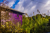IMG_9648.jpg (The Life of Bryan) Tags: athens georgia lensbaby house pussywillow sky seac green purple flickr clouds