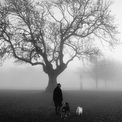.......Winter Fog (paulchapmanphotos) Tags: fog mist trees foggyday winter branches leica monochrom m246 summilux 35mm f14 black white dogs glooming bristol downs clifton durdham
