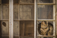 Observador (Bruno Aiub Robledo) Tags: vintage cat window autor frame author gato bruno aiub robledo composition street photography