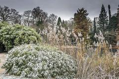 Erster Frost - 0026_Web (berni.radke) Tags: ersterfrost frost raureif wassertropfen rime eisblumen eiskristalle iceflowers icecrystals escarcha
