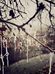 Winter (marcobuccolieri) Tags: ruscello paesaggio freddo ghiaccio vernate ice winter inverno