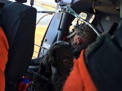 Duck Hunder, dog rescued from marshy area near Indian River (Coast Guard News) Tags: sethjohnson duckhunter dog atlanticcity sar rescuecoastguard philadelphia pennsylvania unitedstates us
