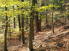 Along the sloping trail (pilechko) Tags: autumn fall color trees leaves bowmanshill newhope pennsylvania buckscounty