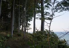 Brodtener Steilufer (1) (Teelicht) Tags: balticsea brodten brodtenerufer deutschland germany kste lbeck meer ostsee schleswigholstein travemnde coast sea luebeck travemuende steilufer steepcoastline
