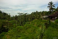 Bali-3