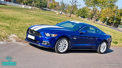 Mustang_05 (holloszsolt) Tags: ford mustang 50 outdoor vehicle sport car nanolex si3 hd autokeramia