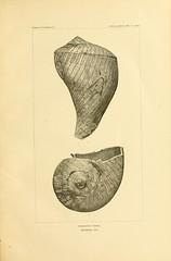 n24_w1150 (BioDivLibrary) Tags: antiquities indianart indians shellsinart smithsonianlibraries bhl:page=11258602 dc:identifier=httpbiodiversitylibraryorgpage11258602 manyhatsofholmes taxonomy artist:name=katecliftonosgood