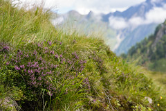 Detail (Michal Soukup) Tags: kaprun salzburg austria at family vacation trip summer outdoor mountains alps landscape nikond600 nikkor85mmf18g