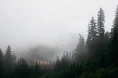 Fog in the Valley (Alexander Tran | atranphoto.com) Tags: mount rainier national park nps100 goparks findyourpark atran atranphoto atranfoto pnw washington wa wash fog foggy rainy valley fuji fujifilm fujifilmxus xt1