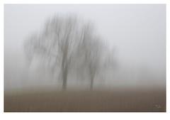 6075 - 2016 - explore (thierry lathoud) Tags: tala lathoudthierry automne nature paysage canon icm blur flou