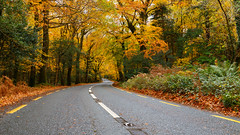 Heading Through Autumn [EXPLORED] (Graham Daly Photography (ASINWP)) Tags: autumn canon1635 canon6d countykerry grahamdalyphotography killarney landscapes woods autumnalcolours fallenleaves imagesofireland irishlandscapephotographer irishlandscapephotography irishlandscapes irishphotographer irishscenery landscapesofireland outdoors photosofireland road thefall trees woodlands headingthroughautumn
