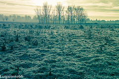 inverno (conteluigi66) Tags: alberi luigiconte brughiera campagna nebbia bestcapturesaoi foschia inverno invernale