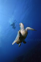2012 12 METTRA OCEAN INDIEN 5459