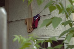 (nich_thomas) Tags: leaves clothes laundry hanging d90