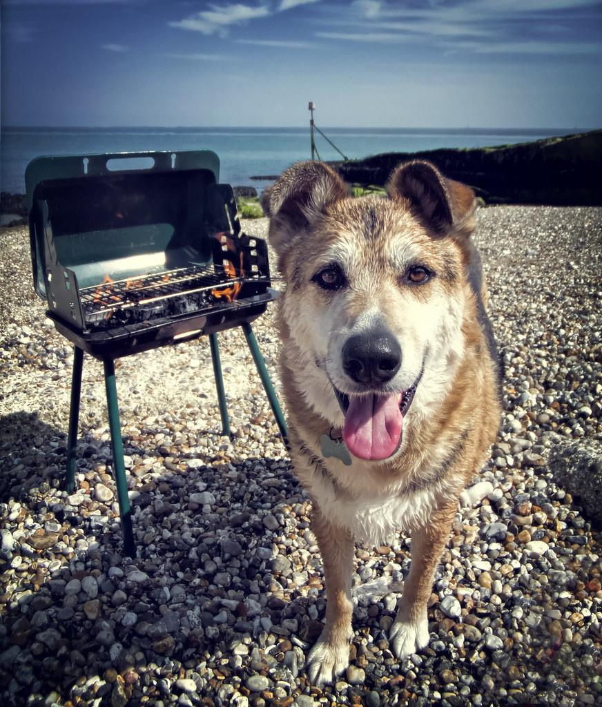 Dog Walks Beaches In West Sussex
