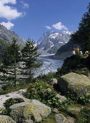 Massif du Mont-Blanc, mer de glace (Ytierny) Tags: panorama france montagne alpes altitude glacier arbre rocher montblanc alpinisme merdeglace massif hautesavoie randonneur srac grandesjorasses ytierny
