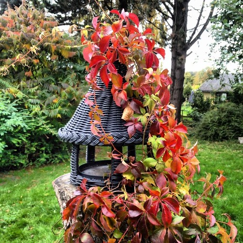 Signs of Autumn in our garden. #autumn #danmark #denmark