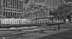 CP-Fall-2013-d700-cz21mm_102713_0121cx (JB Artful Photo) Tags: nyc newyorkcity autumn newyork centralpark manhattan newyorknewyork nikond700 carlzeiss21mmf2