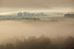 foggy dawn over the Bohemian Switzerland (ahas78) Tag