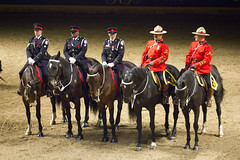 IMG_9822 (laureljarvis) Tags: show winter horse toronto royal police fair rcmp equestrian equine agricultural rawf