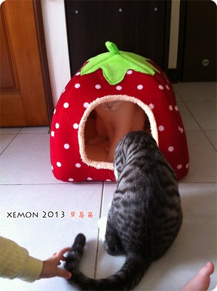 淘寶 草莓窩