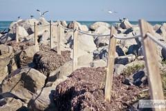 Bill Baggs Beach (Gigi) Tags: wood summer vacation sky usa seascape beach nature canon fence cord coast wooden rocks florida outdoor seagull peaceful sunny nobody rope coastal cape coastline railing ef50mmf18ii keybiscayne warn 500d billbaggscapefloridastatepark t1i