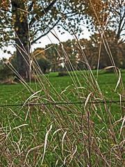 Urdenbacher Kmpe (KL57Foto) Tags: trees nature pen germany autum herbst natur meadows olympus dsseldorf rhine landschaft rhineland rheinaue ep1 aue auenlandschaft floodplain urdenbach baumberger urdenbacherkmpe kmpe urdenbacher kl57foto dsseldorfurdenbach