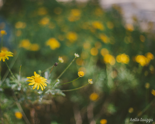 the simplest yellow flower