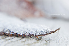 frosty morning  (idni . idniama) Tags: cold detail macro hoja leave nature nikon frost december frosty frio hielo gettyimages whinter idni gettyimagesiberiaq3 lente4up