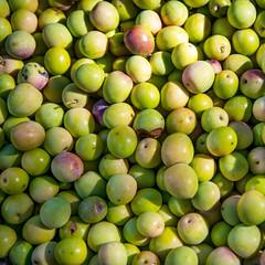 Olivas (oZopanda - David Cívico) Tags: verde green nature rural nikon aceitunas olivas d600
